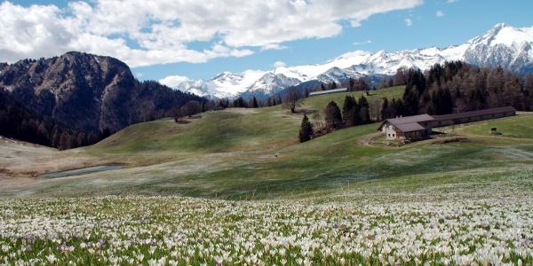Domenica 19 Luglio escursione a Cima Sera 1903m, da Passo Duron (Tione)
